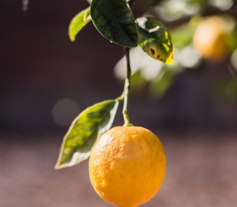 lemons-925533_1920
